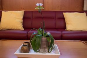 Einzige Zimmerpflanze von Zuhause mitgenommen. Sie blühte im Mai.