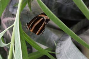 Schmetterling im Orchideenhof