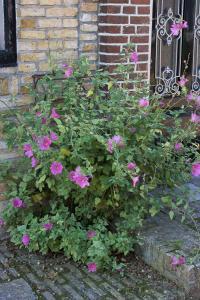 Blumen wachsen bei der Haustüre
