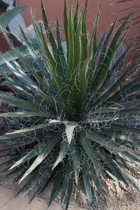 im Botanicus