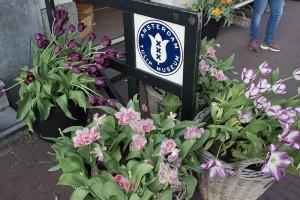 echte Tulpen  vor Tulip Museum