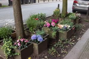 Blumen an der Strasse