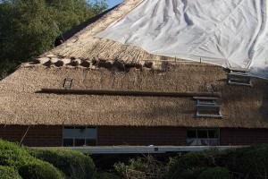 Dach wird mit Reet gedeckt